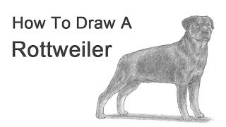 How to Draw a Dog (Rottweiler)