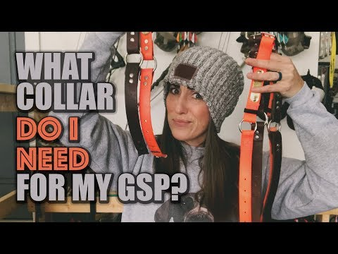 What dog collar do I need for my GSP?