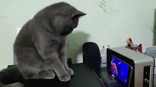 This is the best cat. En iyi kedi. Самый лучший кот. Le meilleur chat.
