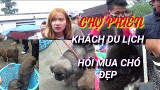 DTVN - 4 con chó xù đẹp nhất thu hút mọi ánh mắt tại chợ phiên Bắc Hà Lào Cai