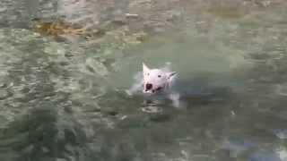 白州の川で泳いできました。