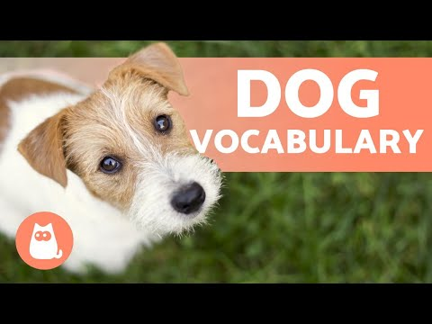 How Many Words Do Dogs Understand? - FIND OUT HERE!