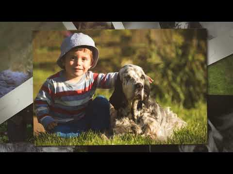 English Setter Upperwood Lucy Liu For Redhara