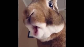 Кролик есть банан - чумовое видео!!!!