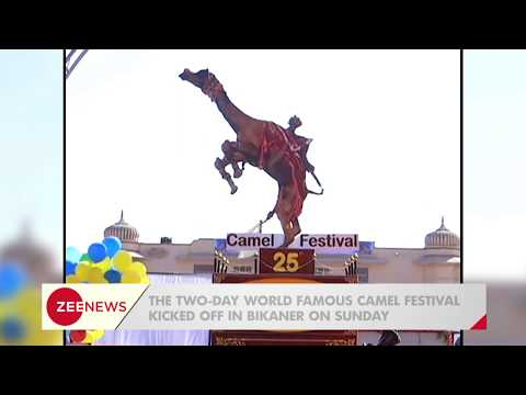 Rajasthan: Get a glimpse of 25th International Camel Festival organised in Bikaner