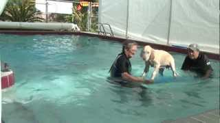 What Is Hip Dog Canine Hydrotherapy