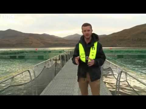 BBC News - Trout farming industry boosts economy in Lesotho