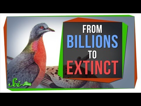 Why Billions of Passenger Pigeons Died in Under a Century