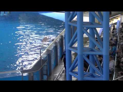 Ocean DIscovery: Dolphins & Beluga Whales! SeaWorld San Antonio 2017!
