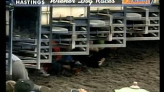 Hastings Racecourse - Wiener Dog Races 2012 - Heat 7