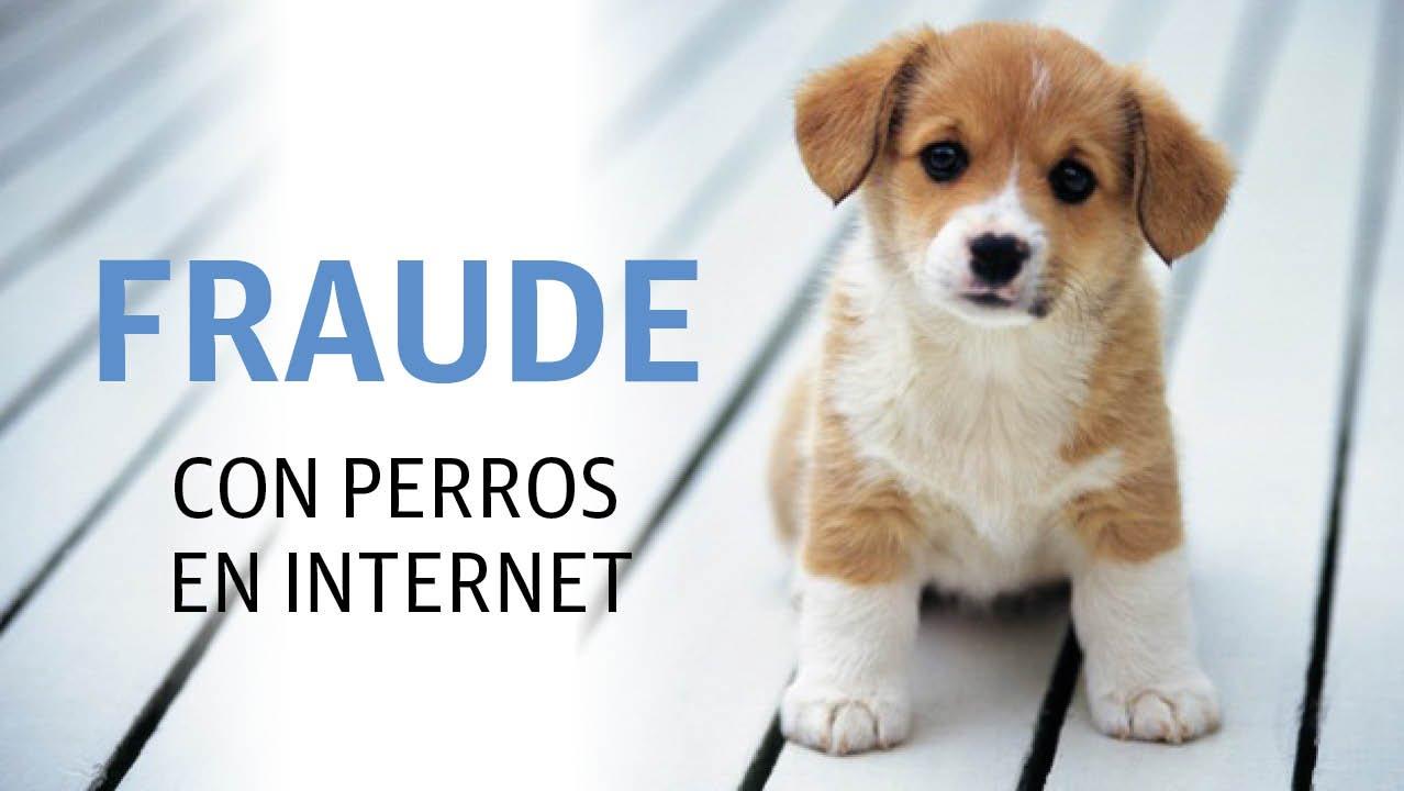 Venta de perros por internet y el fraude que representa - YouTube