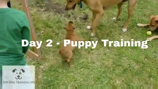 Day 2 - Puppy Training / 5 Day Dog Training Course