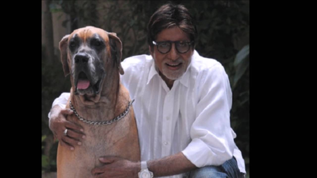 Image result for amitabh bachan pet images