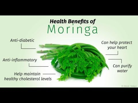 Health Benefits Of Moringa in Urdu | Sohanjna ke Fayde | Very Informative