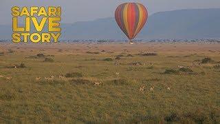 safariLIVE Balloon Adventures thumbnail