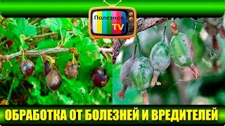 видео Чем обработать плодовые деревья ранней весной от вредителей