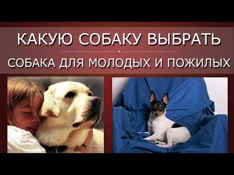 Какую собаку выбрать, ч 4 Собака для молодых и для пожилых