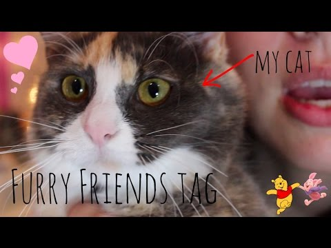furry friend tag || ft my lil cat