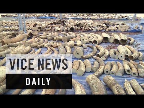 VICE News Daily: France May Bulldoze Makeshift Migrant Camps