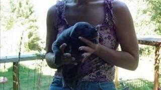 Izabella, Pups & Zeke photos