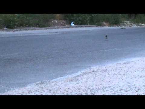 O vrabiuță moartă pe șosea, alta încearcă să o readucă la viață