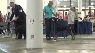 09-01-13 Hawaiian Kennel Club Doberman Pinschers