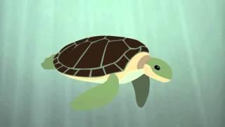 Выживание морской черепахи