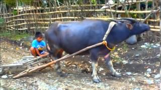 Saludsod ni Ading Pinukpuk Kalinga Province