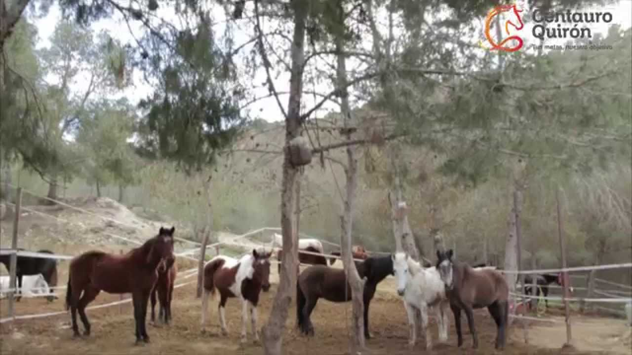 Centauro Quirón en números - YouTube 3eeb51b437600