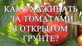 Как ухаживать за томатами 🍅 в открытом грунте