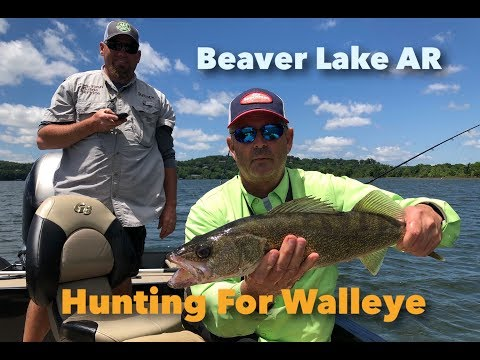 The Hunt For Walleye From Beaver Lake AR
