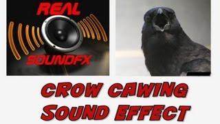 Crow flying past cawing sound effect - realsoundFX