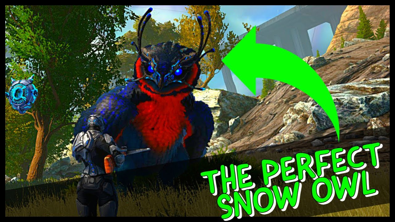 EPISODE 6: THE PERFECT SNOW OWL!!!