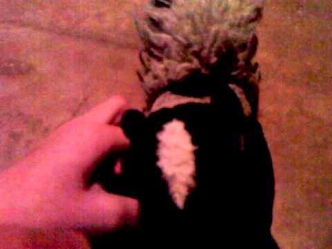 Skunky the Skunk