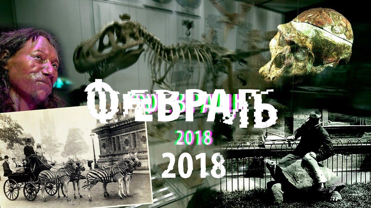 Микрофотографии, Ротшильд, неандертальцы-художники, паук с хвостом #DARWINews 3