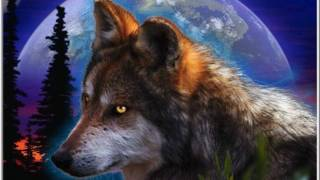 Der alte Wolf wird langsam Grau.wmv