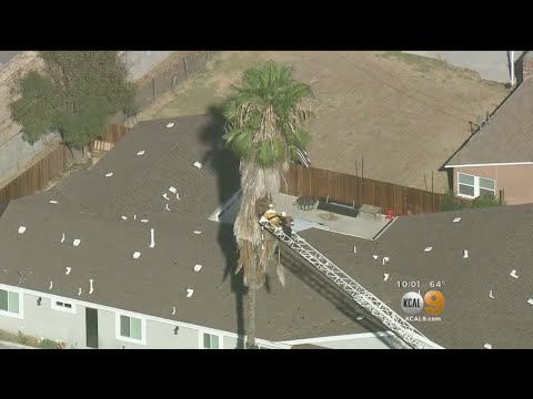 Tree Trimmer Found Dead Inside Large Palm In Hacienda Heights