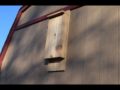How To Build A Bat House Woodlogger
