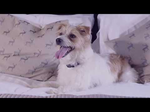 Olly the Jack Russel - Late Rooms