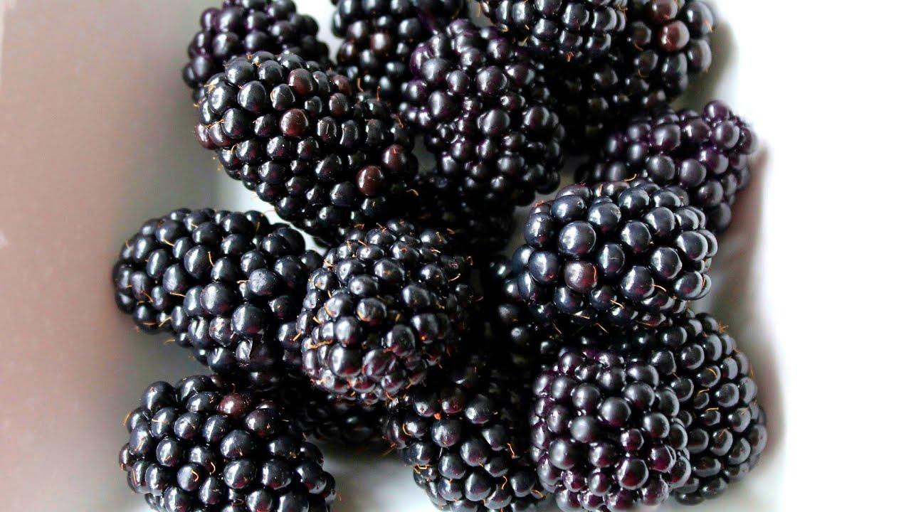 Realistic Sugar Gumpaste Blackberries Tutorial   Cake Decorating Tutorial