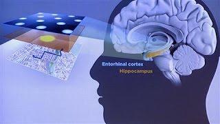Nobel Prize for Medicine: How Humans Navigate