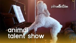 Animal Talent Show | The Pet Collective