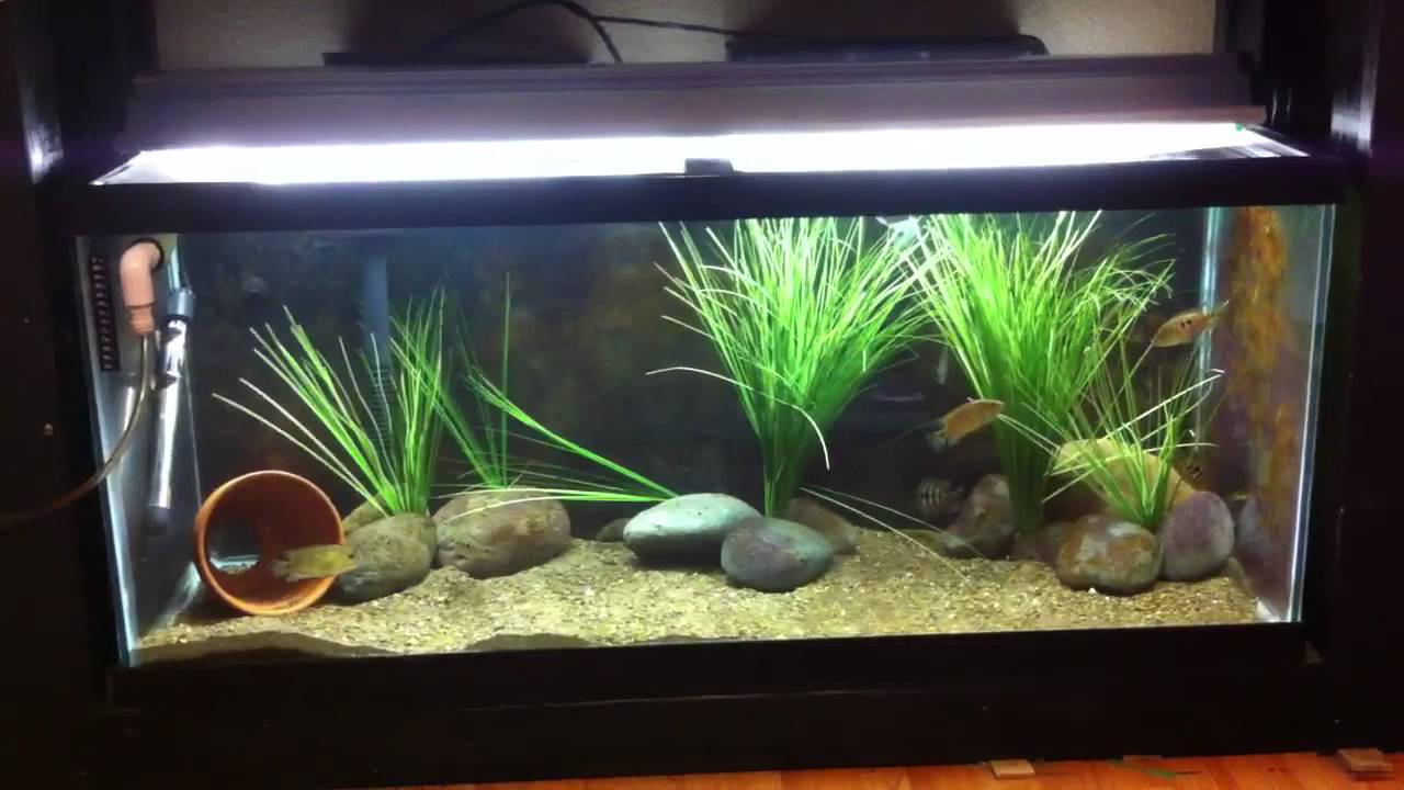Glass vs acrylic aquariums youtube for Acrylic vs glass fish tank