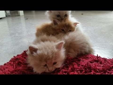 Perser Babys