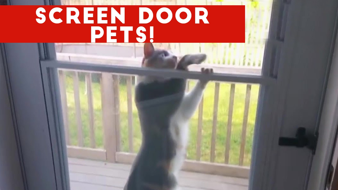 Funniest Pets React To Screen Door Video Compilation February 2017 | Funny Pet Videos