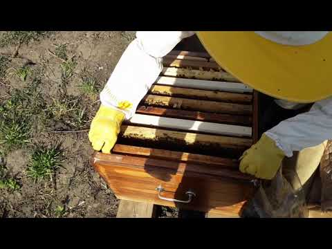3. Развитие от пчелопакета до пчелосемьи