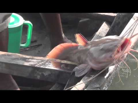 sundarban fishing