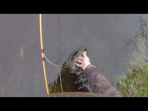 Fly Fishing For Grayling With A Cane Rod On The Welsh Dee At Pontcycyllte 23-12-2018