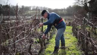 "Quatre Saisons au Vignoble Pestoury  "" episode 1 """