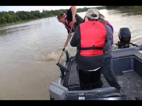 Mantik Catfishing 2014